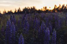 Free Purple Petaled Flowers Stock Photo - 109918640