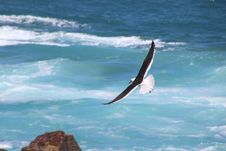 Free Time Lapse Photo Of Soaring Bird Above The Sea Royalty Free Stock Photo - 109918665