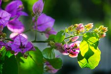 Free Selective Focus Photography Of Purple Petaled Flowers Royalty Free Stock Image - 109918876
