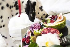 Free Black And White Dalmatian Dog Eating Fruits Stock Images - 109918884