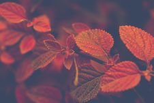 Free Shallow Focus Photo Of Red And Brown Leaves Stock Photos - 109919063