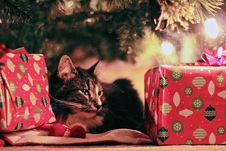 Free Tabby Cat Lying Under Christmas Tree With Gifts Stock Images - 109919184