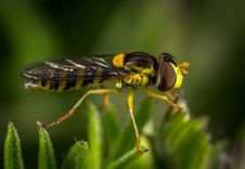 Free Black And Yellow Insect Royalty Free Stock Photo - 109919185