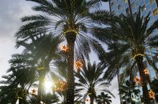 Free Photo Of Palm Trees Royalty Free Stock Photography - 109919287