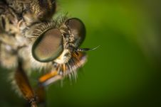 Free Macro Photography Of Fly Stock Photography - 109919302