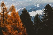 Free Brown And Green Leaf Trees With Snow-covered Field In Background Royalty Free Stock Photography - 109919347
