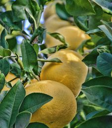 Free Yellow Fruits Stock Image - 109919431