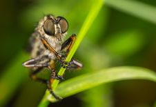 Free Macro Photography Of Robber Fly Perched On Green Leaf Stock Photos - 109919523