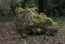 Free Brown Tree Log Filled With Moss On Withered Leaf Field Royalty Free Stock Images - 109919739