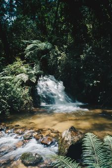 Free Water Stream Surrounded By Plants Royalty Free Stock Images - 109919779