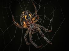 Free Brown Barn Spider In Closeup Photography Royalty Free Stock Photography - 109919987