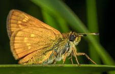 Free Brown Moth In Close-up Photography Stock Images - 109920274