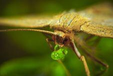 Free Macro Photography Of Brown Moth Royalty Free Stock Image - 109920276