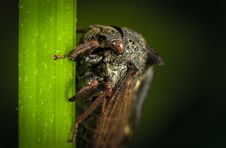 Free Close Up Photo Of Black Cicada On Green Leaf Stock Photography - 109920312