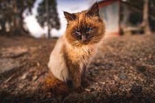 Free Cute Cat Stock Image - 109920581