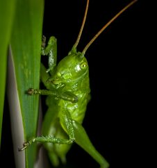Free Close-up Photography Of Grasshopper Perched On Green Leaf Royalty Free Stock Image - 109920626