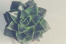 Free Green Succulent Plant Stock Image - 109920641