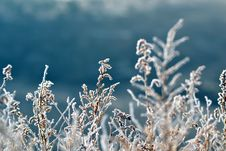 Free Frosted Plant Stock Image - 109920811