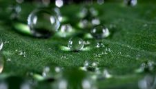 Free Macro Shot Of Water Droplets Royalty Free Stock Images - 109920939