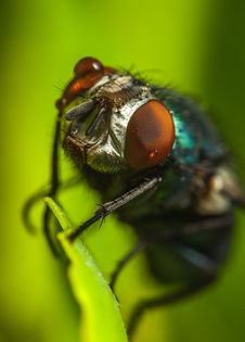 Free Photography Of Fly On Green Leaf Stock Photography - 109920942