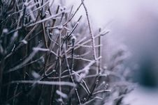 Free Macro Photography Of Branch With Snow Stock Images - 109920984