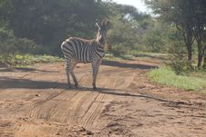 Free Photo Of Zebra On Dirt Road Royalty Free Stock Photography - 109921147