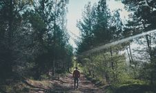Free Photo Of Man Walking Along Pathway At Forest Stock Photos - 109921213