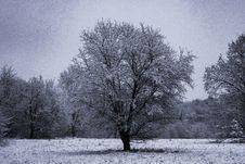 Free Gray Bare Tree Stock Photography - 109921292