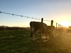 Free Animal Beside Fence Royalty Free Stock Photography - 109921317