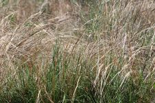 Free Focus Photography Of Green Grass Field Stock Photo - 109921350