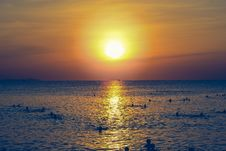 Free Silhouette Of People Swimming In The Ocean During Sunset Stock Photography - 109921372