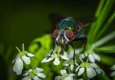 Free Focus Photography Of Green Bottle Fly Stock Image - 109921591