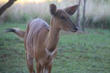 Free Photo Of A Deer Royalty Free Stock Images - 109921619