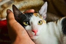 Free Person S Left Hand Holding Calico Cat Stock Photos - 109921763