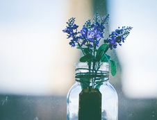 Free Close-Up Photography Of Purple Flowers In Clear Glass Vase Stock Photography - 109921782