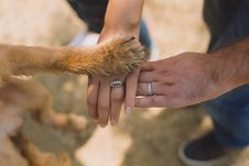 Free Two Person With Rings On Ring Fingers Stock Photo - 109921840