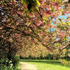 Free Green Trees With Pink Flowers Near River Royalty Free Stock Images - 109922039