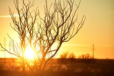 Free Photo Of Branches During Golden Hour Stock Photography - 109922092