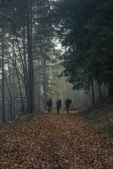 Free Three Person Walks On Dried Leaf Covered Pathway Surrounded By Trees Royalty Free Stock Images - 109922129