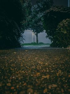 Free Gray Asphalt Road In The Middle Of Green-leafed Trees And Plants Stock Image - 109922211