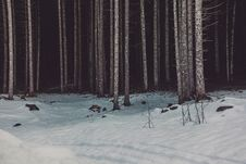 Free Photo Of Woods Near Snow Stock Images - 109922264