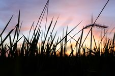 Free Depth Of Field Photo Of Grass Silhouette During Golden Hour Royalty Free Stock Images - 109922269