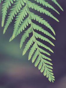 Free Selective Photo Of Green Leaf Fern Royalty Free Stock Photo - 109922285