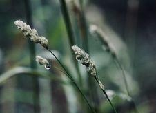 Free Close Up Photo Of Green Plant Stem Stock Photos - 109922293