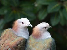 Free Two White-brown-and-green Birds Selective Focus Photography Stock Photos - 109922303