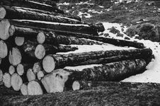 Free Grayscale Photo Of Piled Wood Logs Royalty Free Stock Photos - 109922308