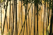 Free Selective Photography Of Bamboo Trees Stock Images - 109922384