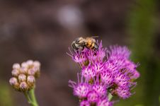 Free Selective Focus Photography Of Bee On Purple Petaled Flower Stock Photo - 109922480