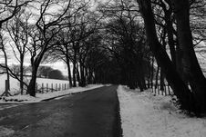 Free Grayscale Photo Of Road In Between Withered Trees Royalty Free Stock Photos - 109922518