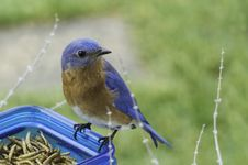 Free Selective Focus Photography Of Blue And Brown Bird On Blue Glass Canister Stock Photography - 109922652